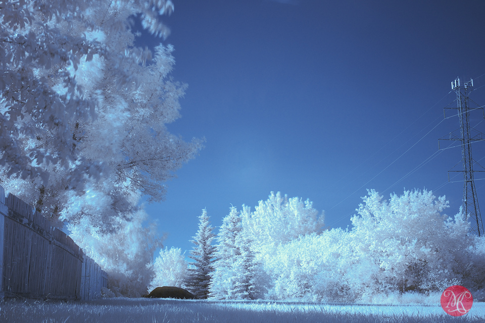 infrared landscape trees edmonton photography