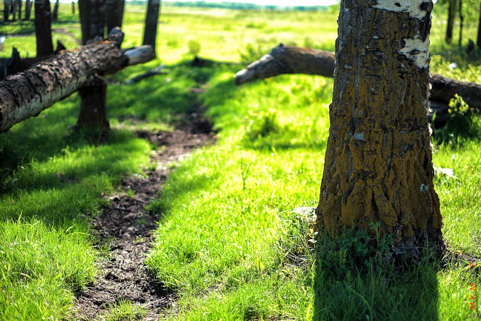 elk island tree grass