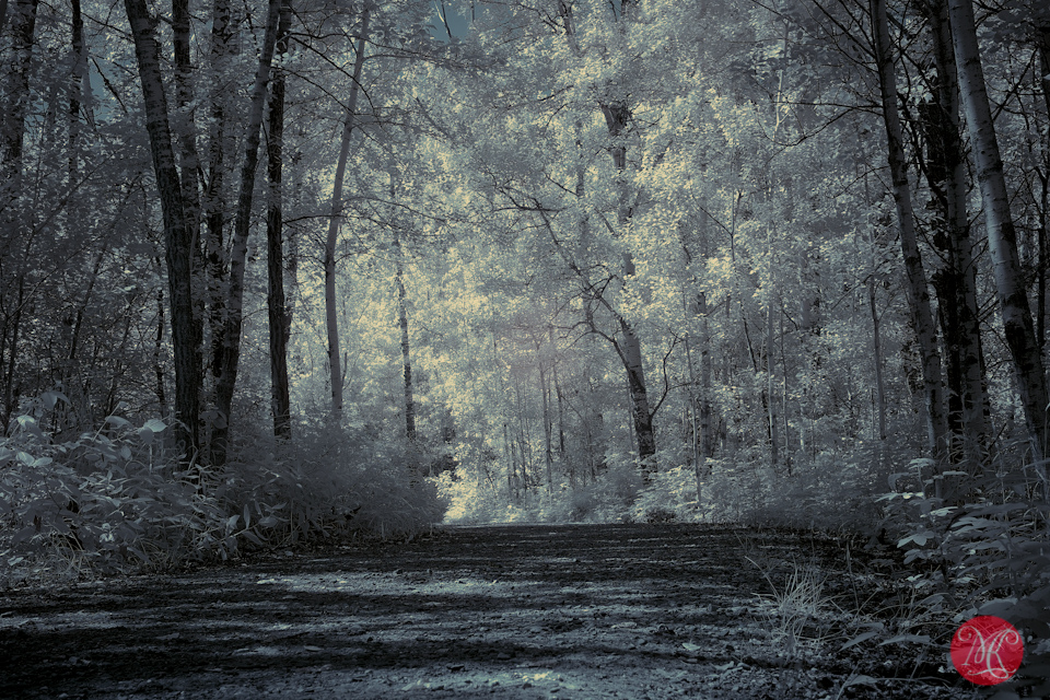 1 infrared path forest