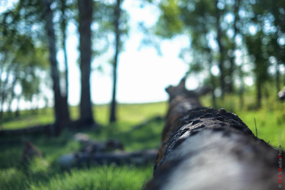 trees bokeh landscape alberta