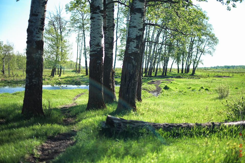 elk island landscape park alberta