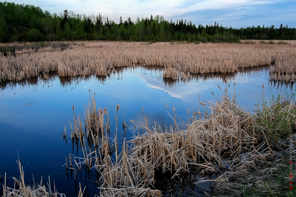landscape alberta lake trees