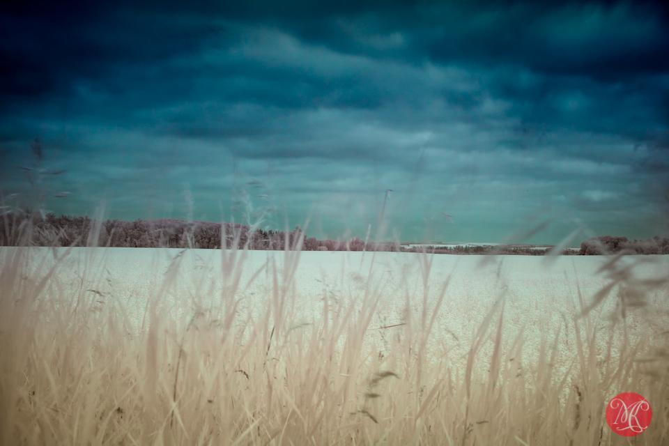 6 landscape photography alberta
