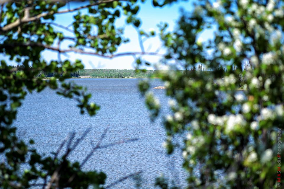 trees lake elsk island park alberta