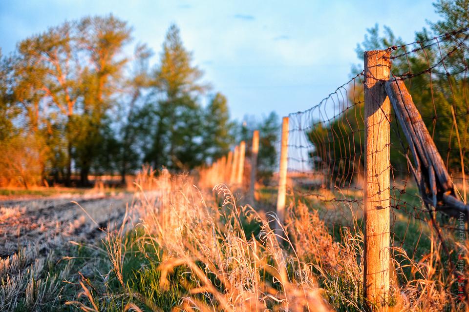 alberta fence trees sunrise landscape