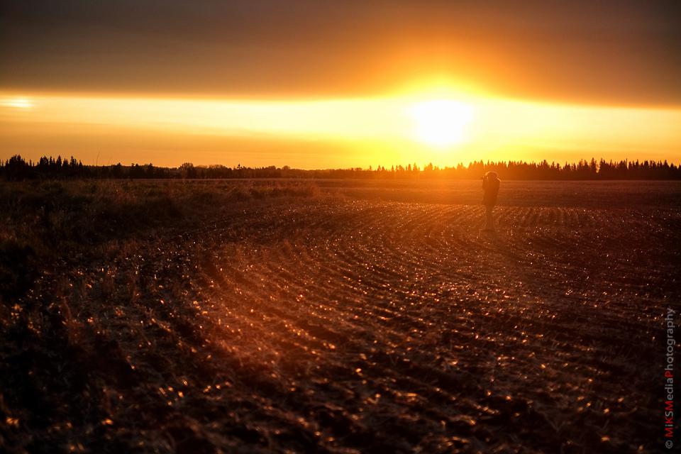 field sunrise alberta landscape