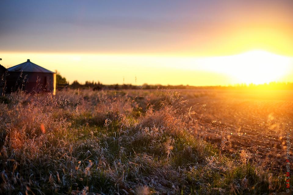 alberta landscape farm field photography