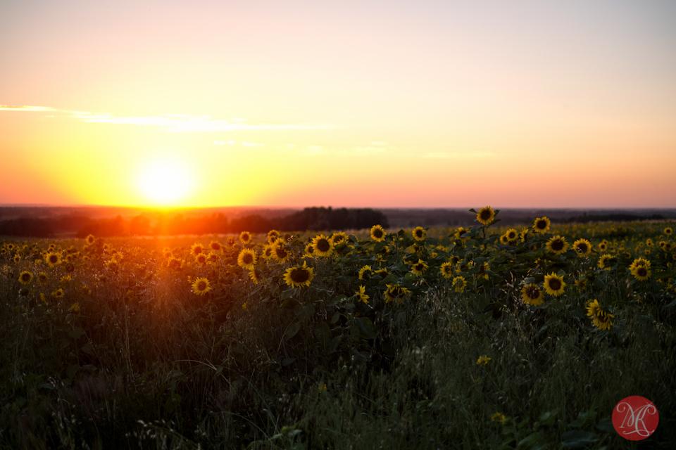 alberta bowden sunmaze sunset landscape photography