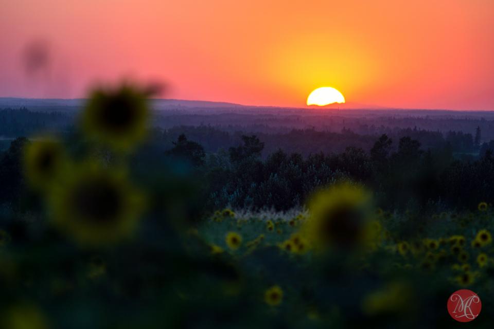 alberta landscape sunset bowden sunmaze