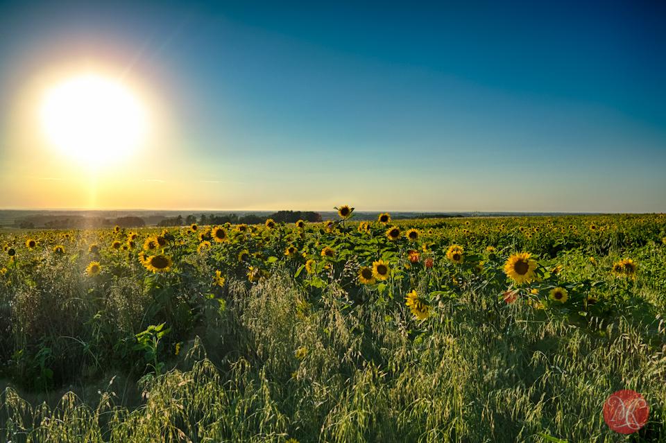 landscape alberta bowden sunmaze