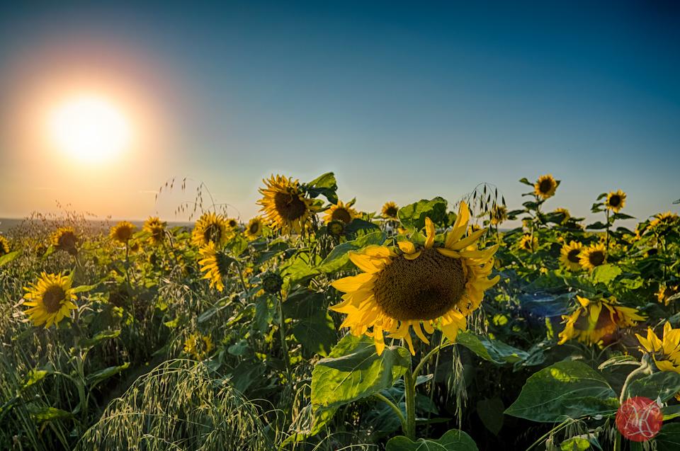 alberta sunmaze bowden landscape nature photography