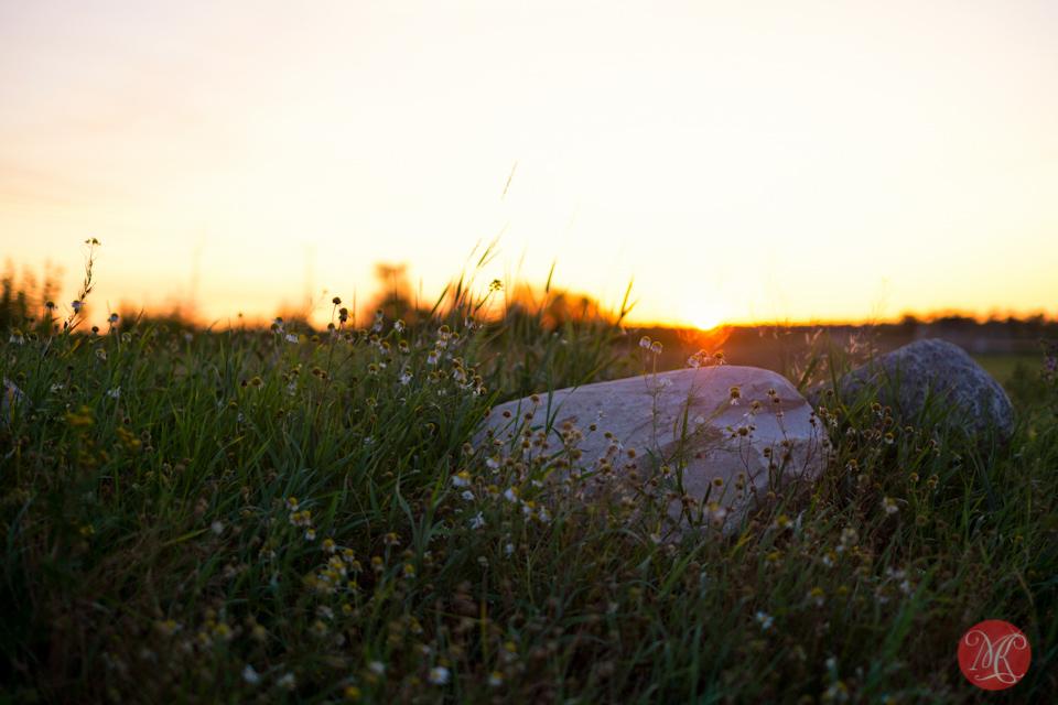 alberta landscape sunrise edmonton photographer