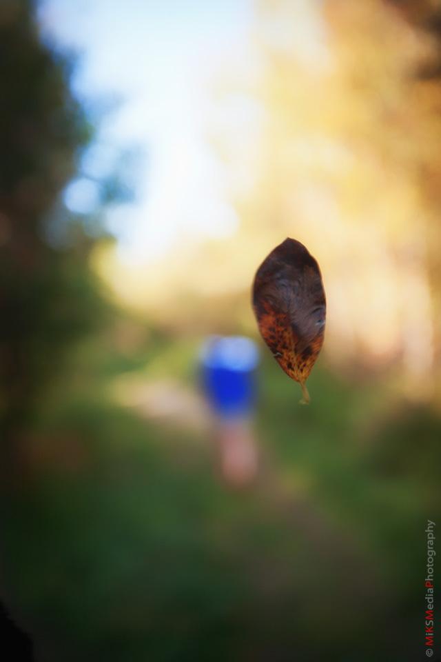 leaf fall edmonton nature photographer