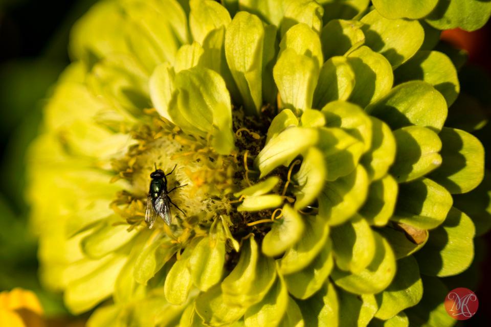 fly macro flower garden edmonton