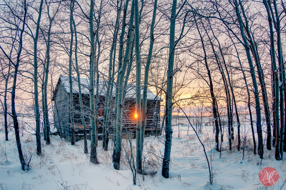 sunrise farm alberta trees snow winter