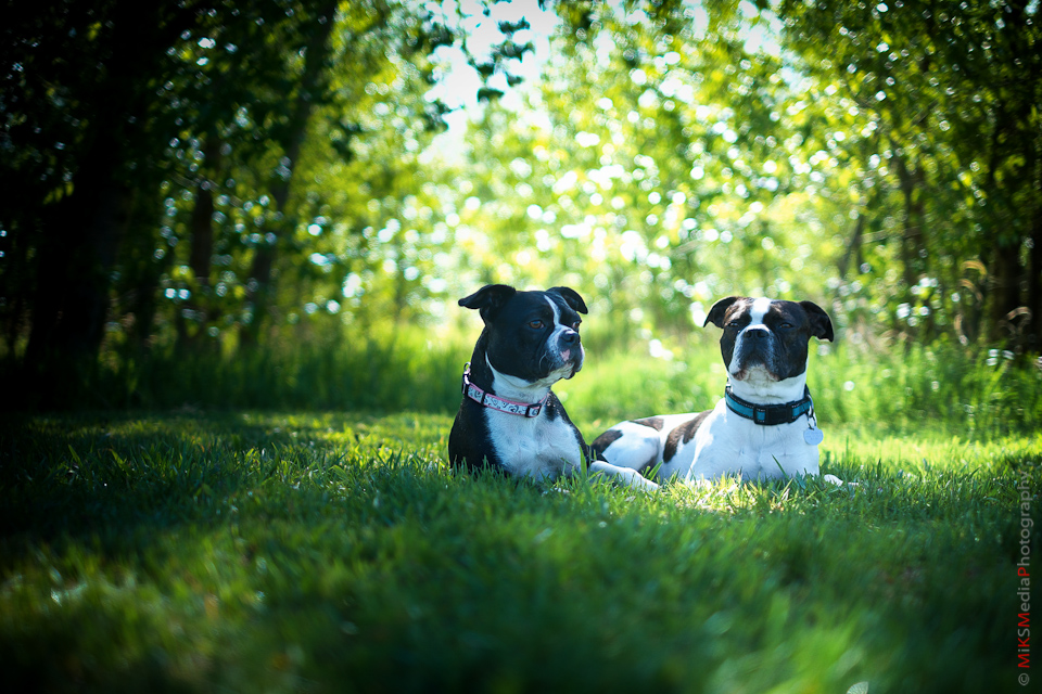 pet animal dog portrait photography