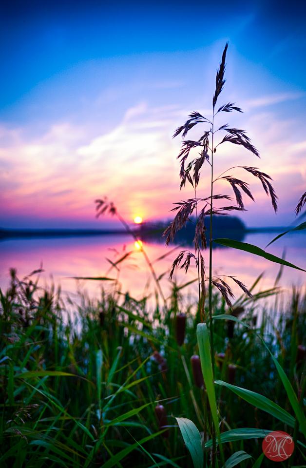 alberta landscape elk island sunset