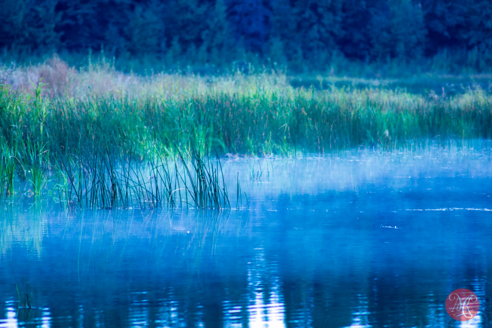 alberta landscape elk island sunset fog