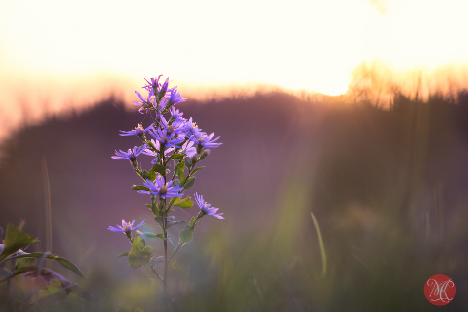 morning-sunrise-alberta-nature-flower