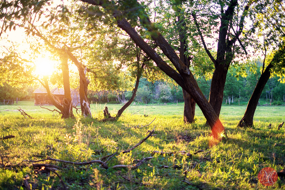 landscape sunset farm alberta summer photography