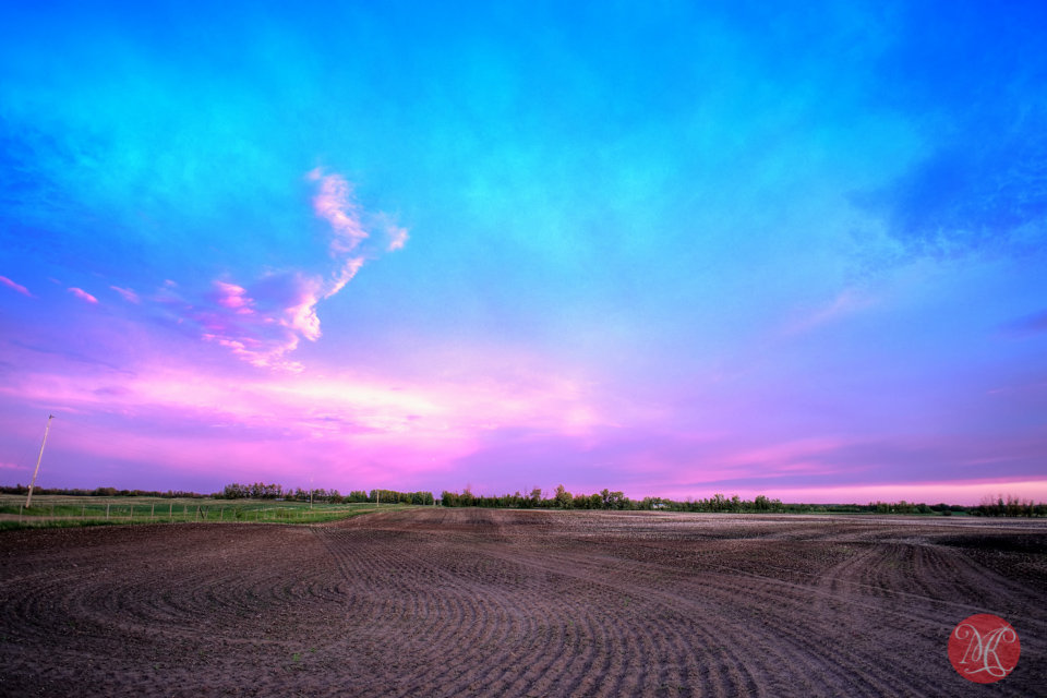 field-landscape-alberta-photographer-sunset-summer