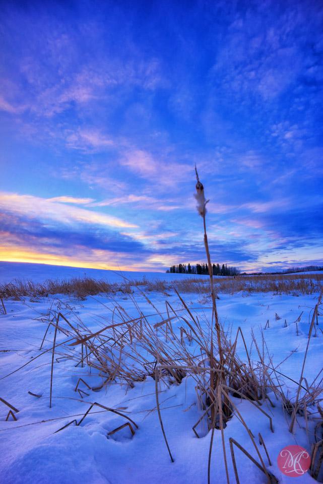 winter alberta sunset landscape