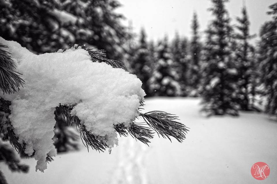 Forest winter snow alberta landscape photographer