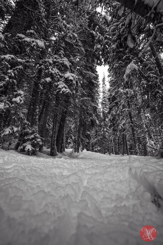 winter forest alberta landscape photography