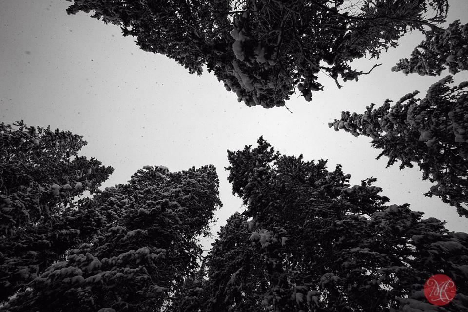 alberta winter landscape trees snow