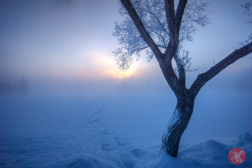 sunrise snow alberta landscape