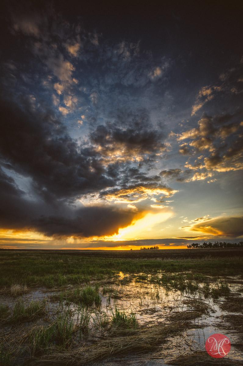 sunset alberta field prairie landscape