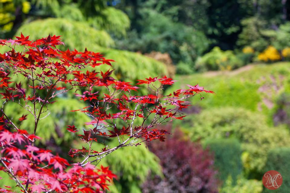 Butchart Gardens, Victoria, BC .. 8