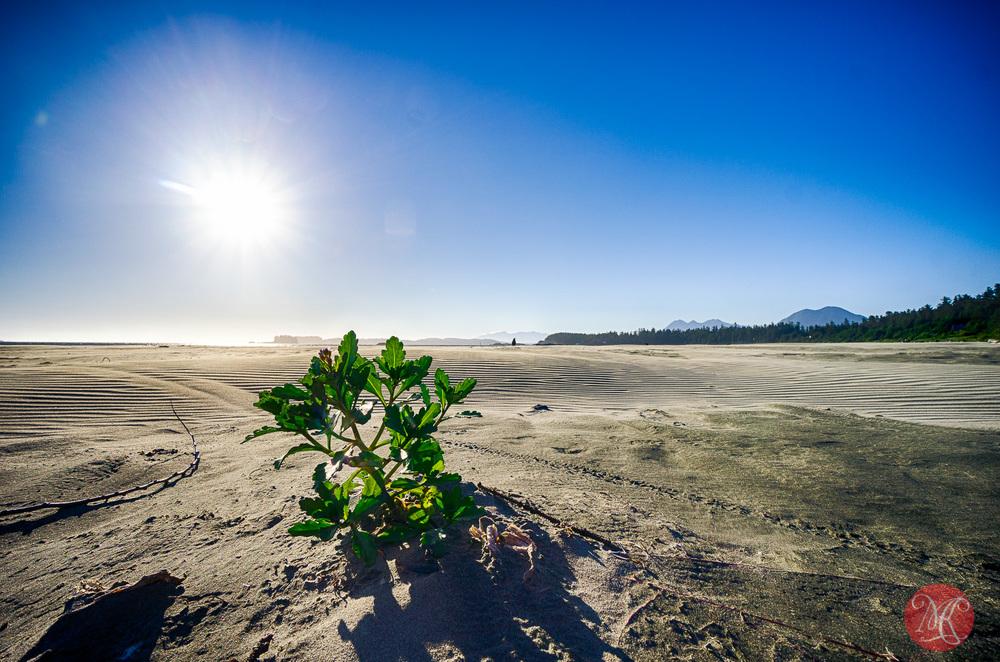 long,beach,bc,tavel,sea,landscape,photography 03