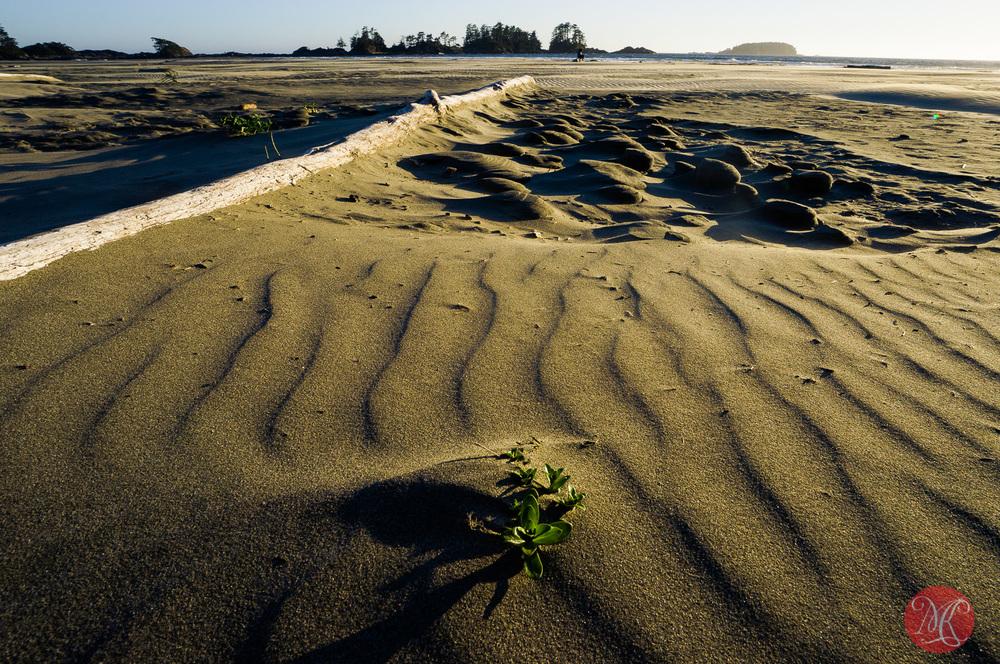 long,beach,bc,tavel,sea,landscape,photography 05