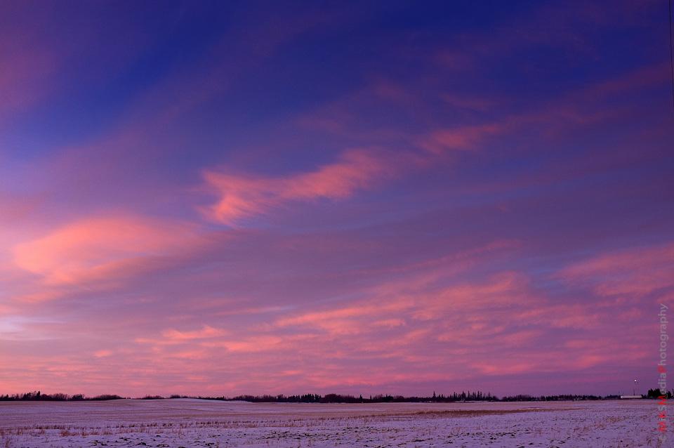 prairie-5.jpg