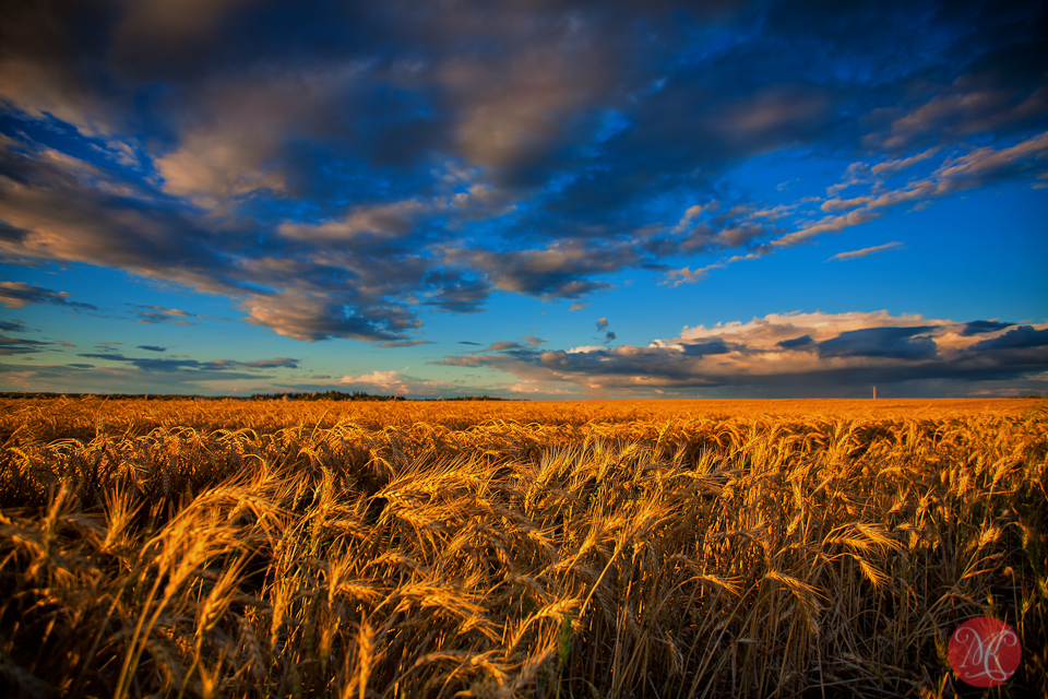 3-canada-alberta-fall-harvest-fields-landscape-sky-clouds-wheat.jpg