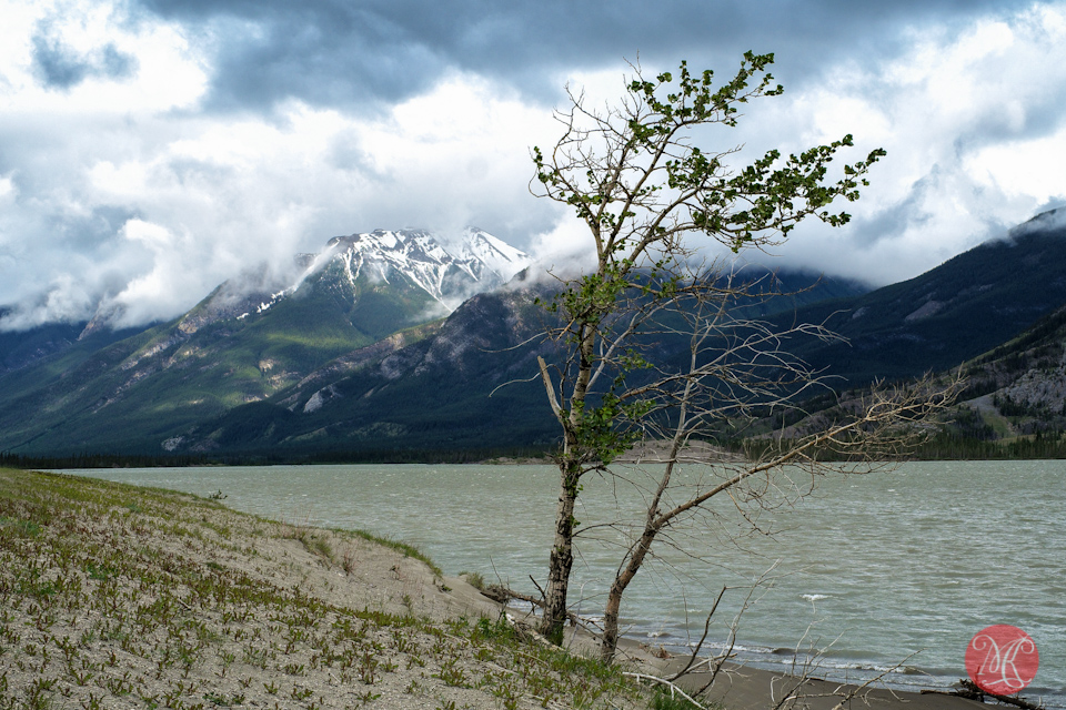 3-lake-jasper-tree-mountain-landscape-alberta.jpg