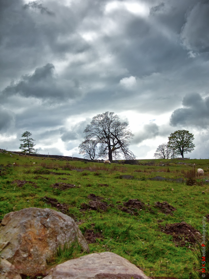 5-scotland-highlands-countryside-travel-nature-landscape-trees-meadows-sky-clouds.jpg