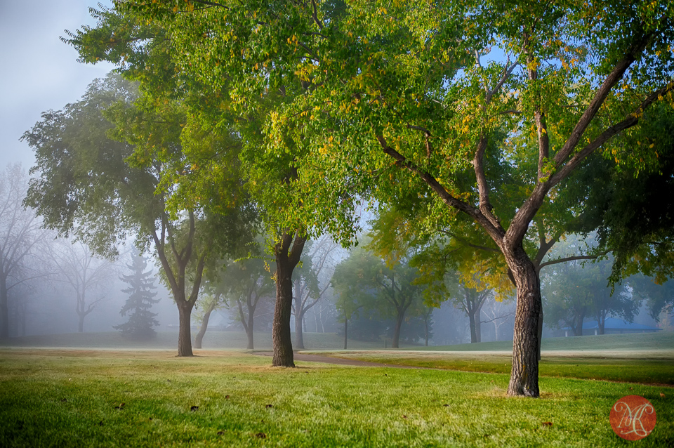 8-canada-alberta-edmonton-fall-mist-fog-park-trees-mood-beauty.jpg