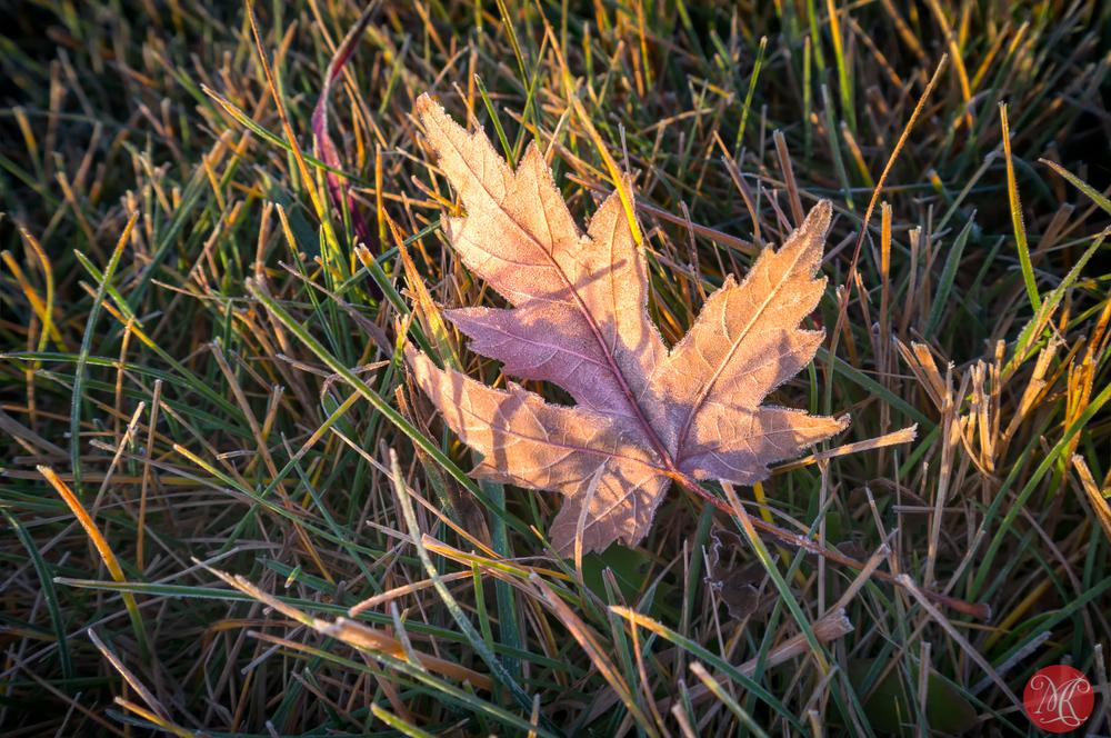 Frosty fall morning in Alberta