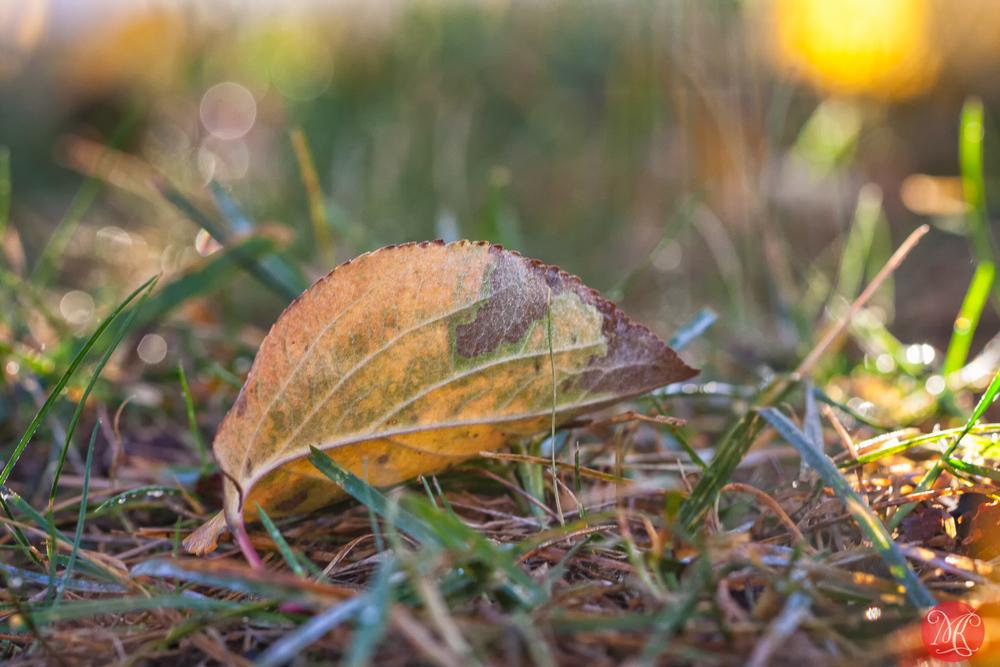Fall morning in Alberta