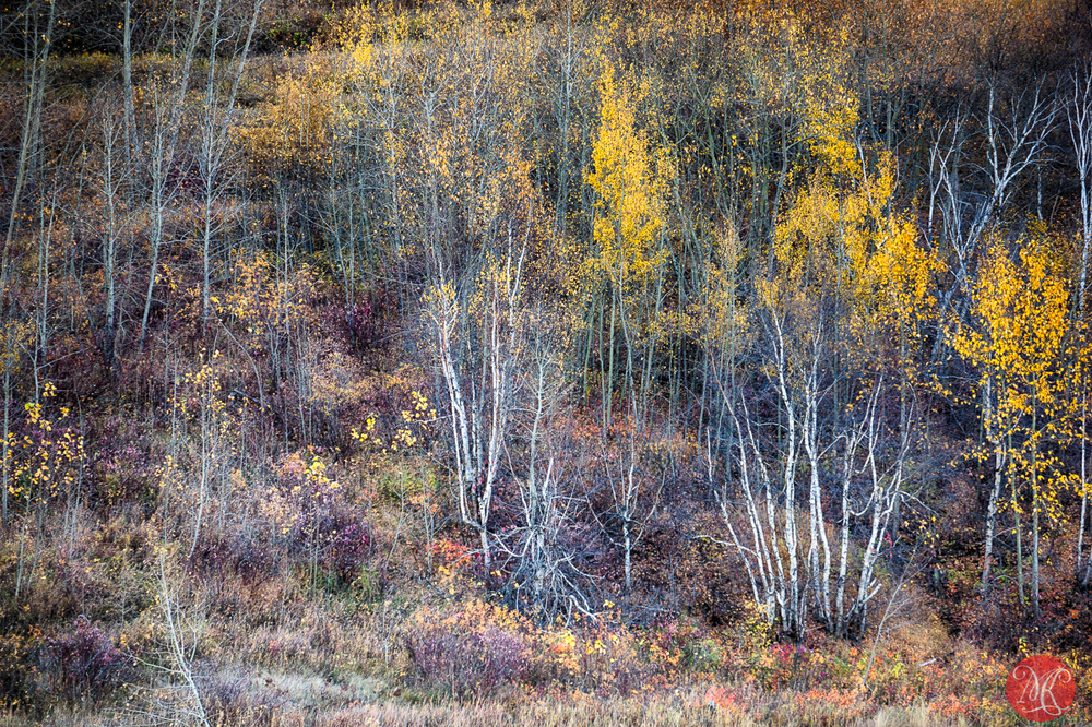 Fall in Edmonton River Valley - Alberta Landscape Photography