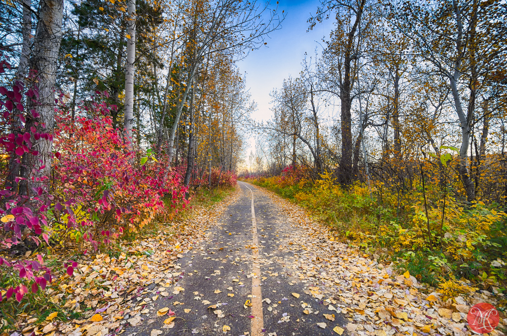 Fall in Edmonton River Valley - Alberta Landscape Photography