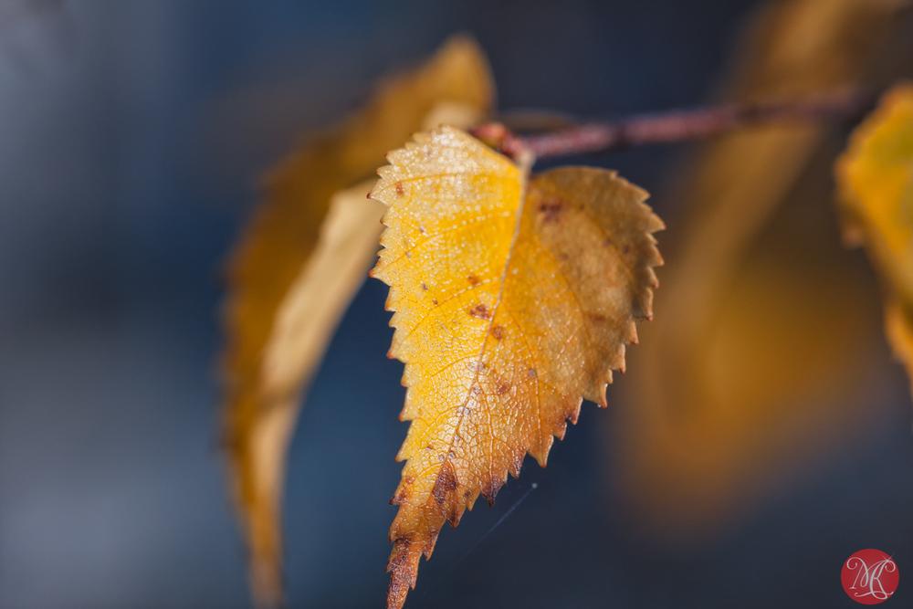 Fall macros