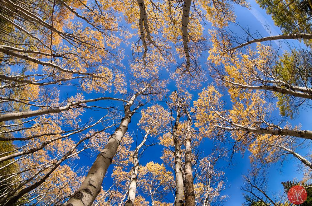 Fall Rockies - Alberta Landscape Photography