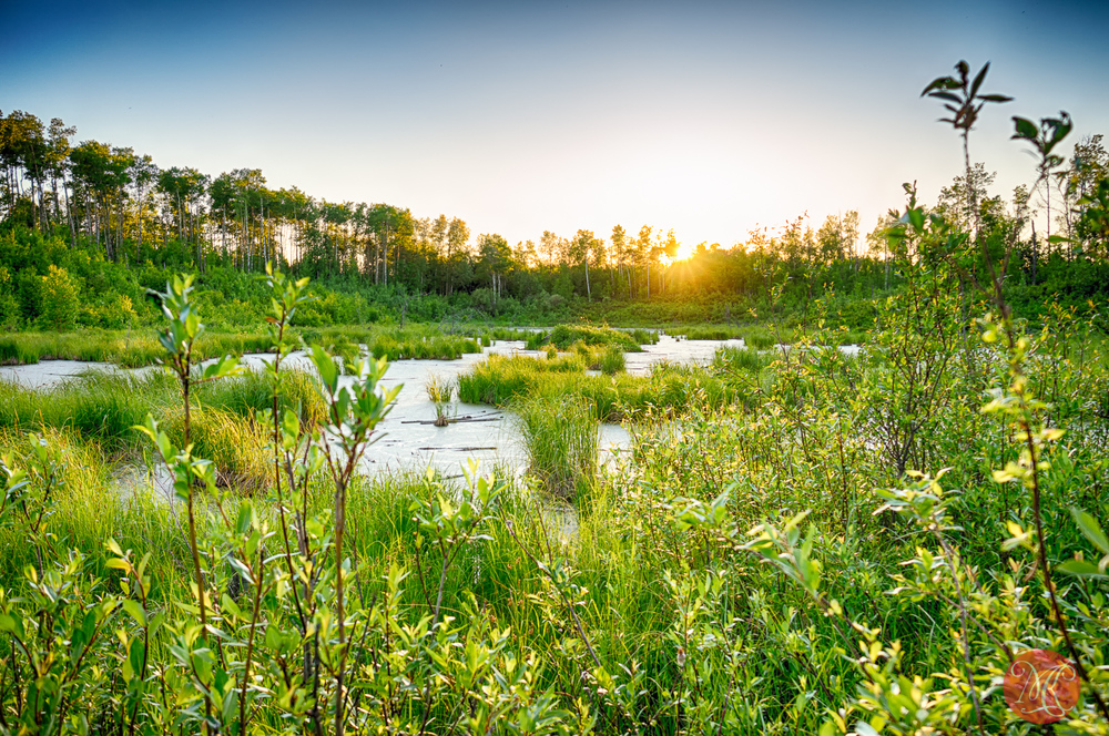 First Day of Summer - Alberta Landscape