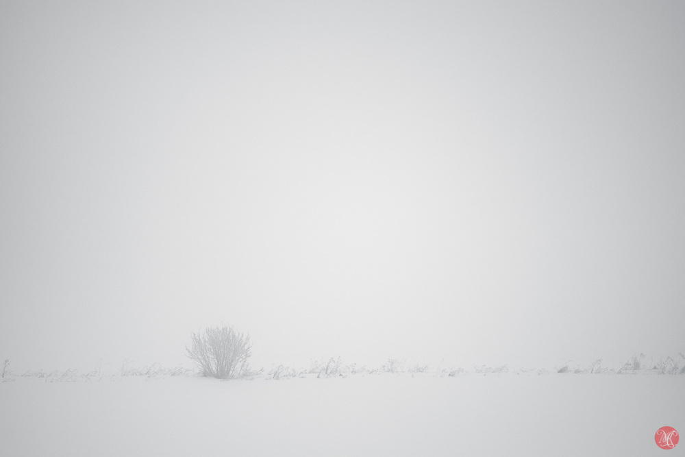 Alberta Winter in Fog
