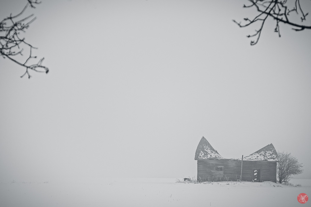 Alberta Winter in Fog - Alberta Landscape Photography