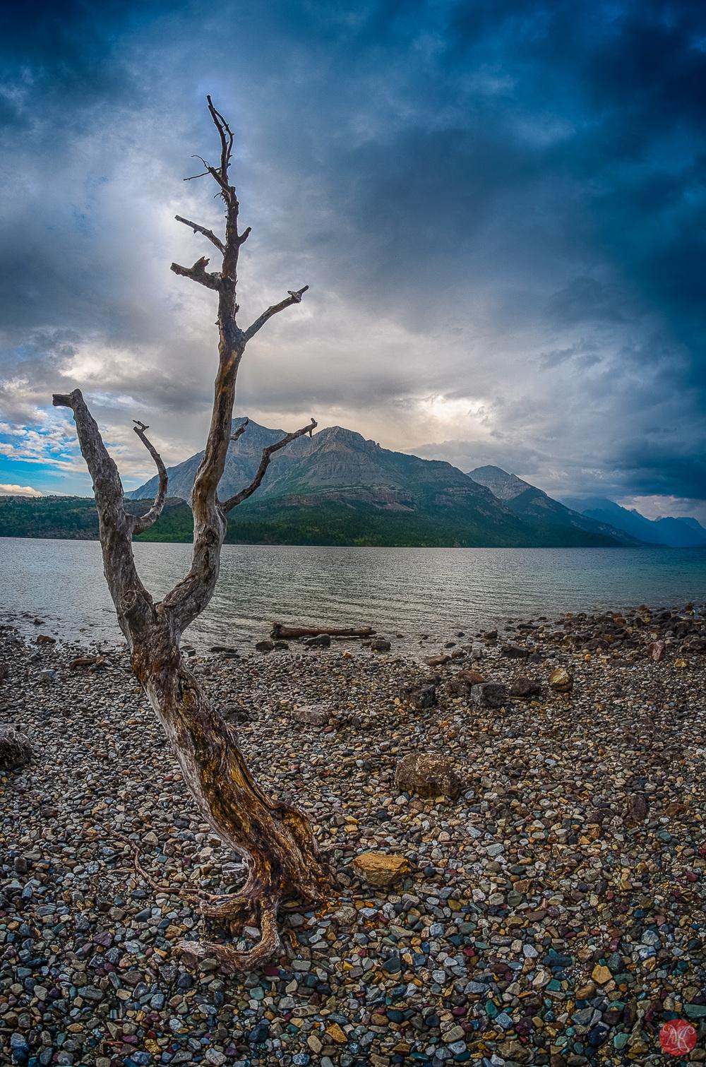 Lonely Tree in Waterton - Alberta Landscape