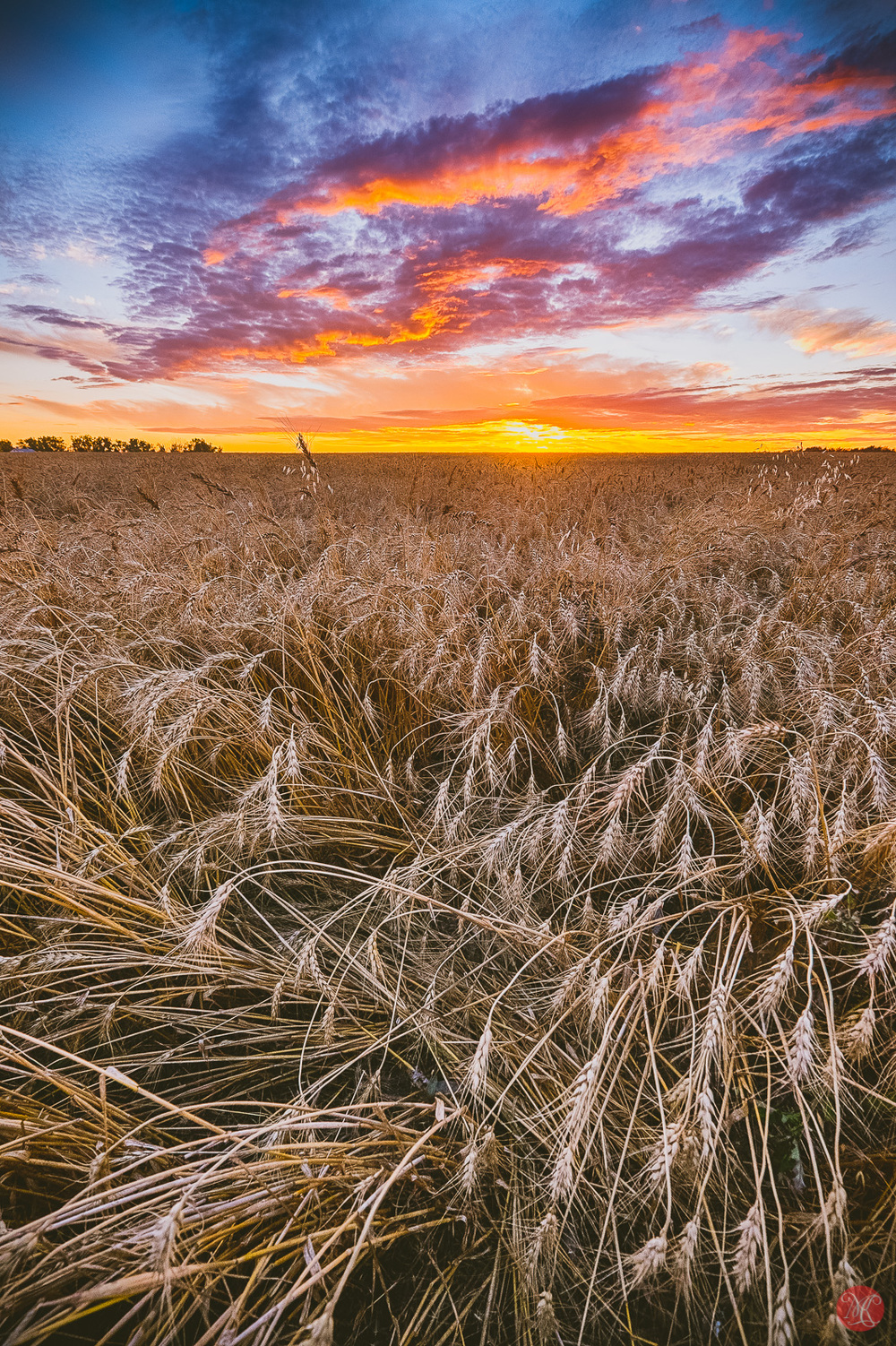 Beautiful skies at harvest time - Alberta Landscape
